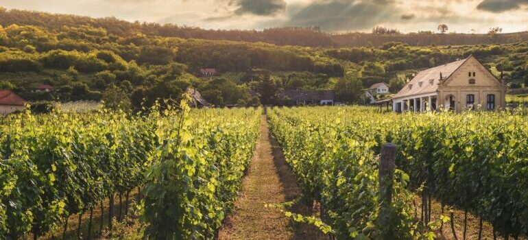 Uživate u pogled na vinograde nakon selidbe Grocka.