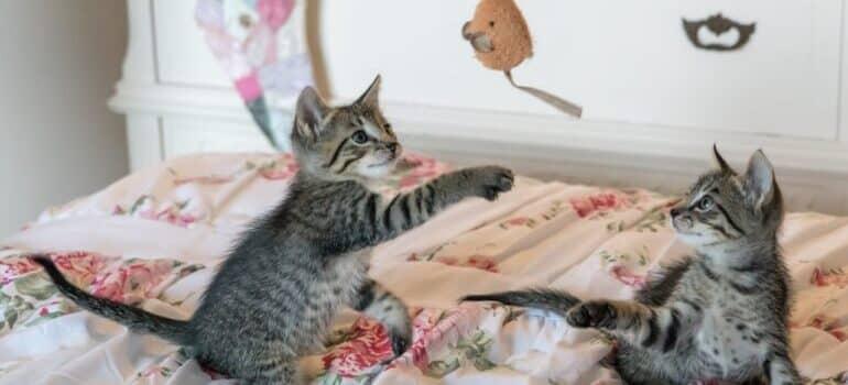 Mačići se igraju