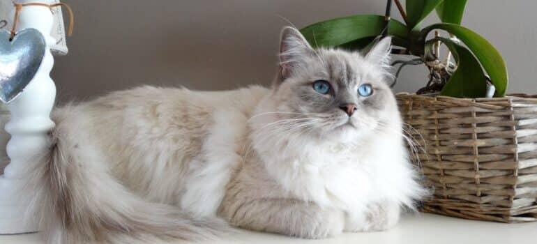 Mačka u novoj kući