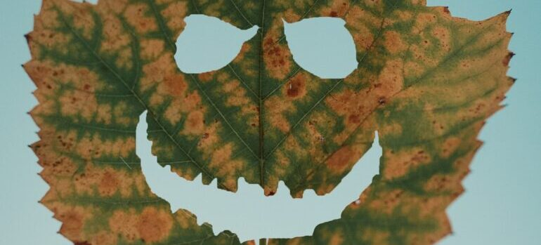 List u obliku smajlija