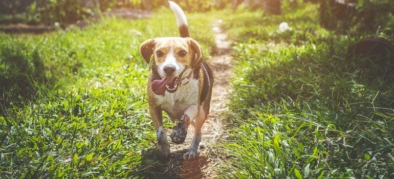 Pas bez povoca nekon što se preselite na Novi Beograd